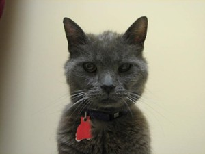 Gray Cat forthright at hospital